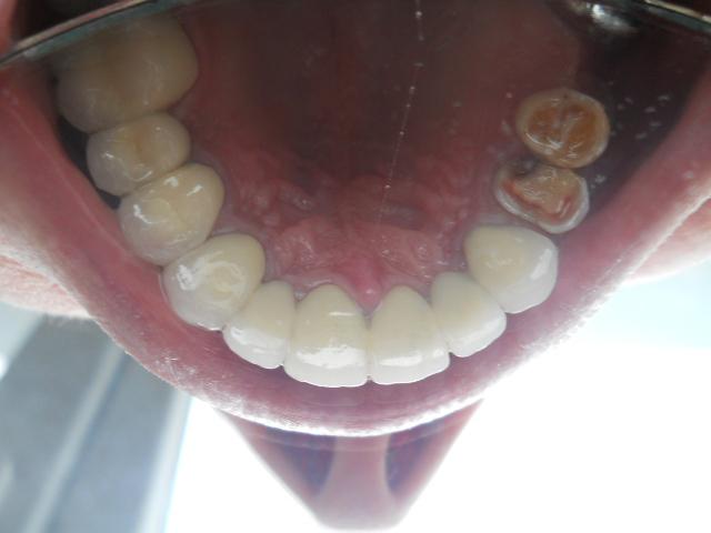 концепция Программы заращивание дырок в зубе Ветеринарная клиника, Зоомагазин